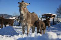 Weiterlesen: 2017.02.24: Spuren im Schnee