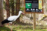 Weiterlesen: Saisonstart Naturpark Buchenberg